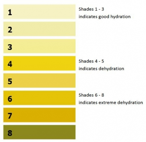 Urine chart demonstrating that you are well hydrated if your urine is pale straw, amber or honey coloured. Dark yellow urine colour is usually a sign that you are not drinking enough fluid.